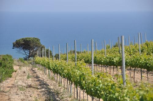 Vistas de los viñedos, Alella