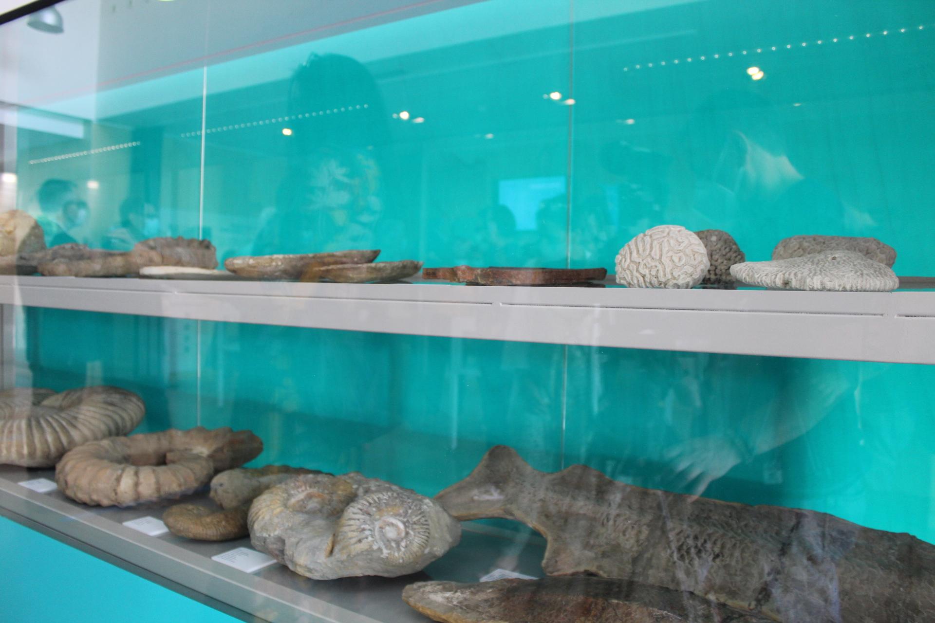 Fósiles de Eduard Punset
